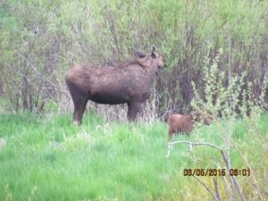 Spanish Creek wildlife shoot 019